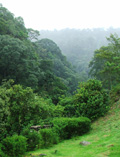 Picture Of The Day: Cloud rainforest in Paso Ancho.